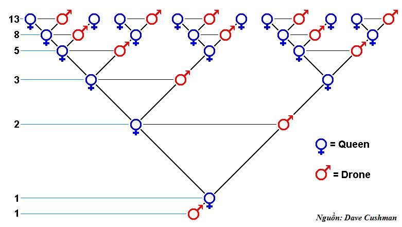 Dãy Fibonacci hình ảnh 1