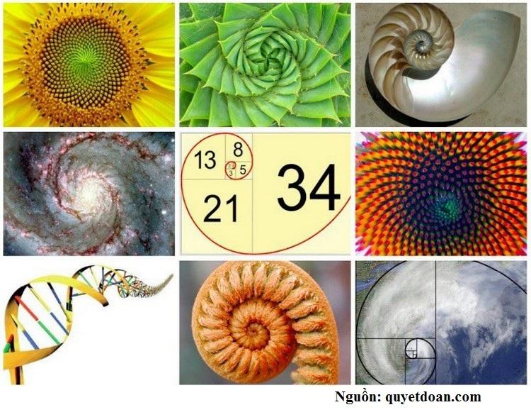 Dãy Fibonacci hình ảnh 4